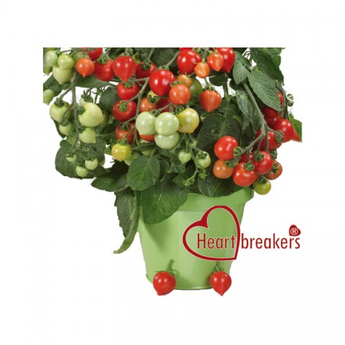 do kvetinacu.jpg