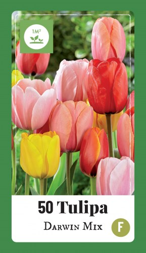 320.100 Label - 50 Tulipa Darwin Mix4