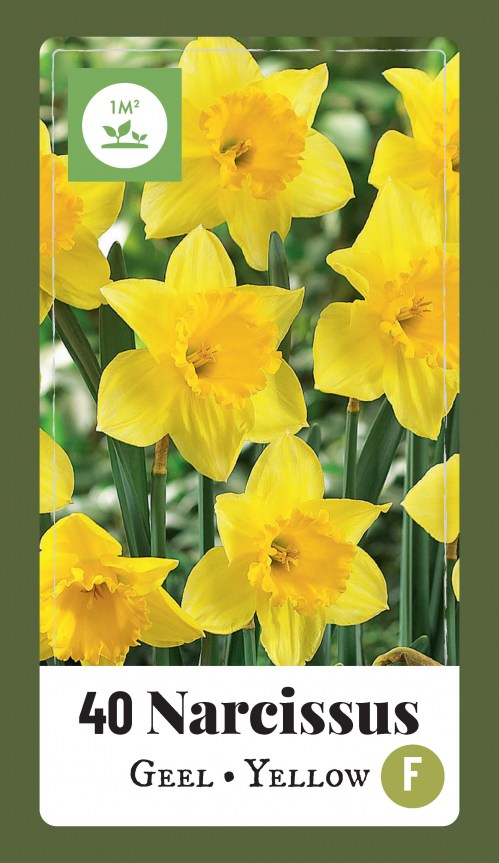 320.450 Label - 40 Narcissus Yellow9
