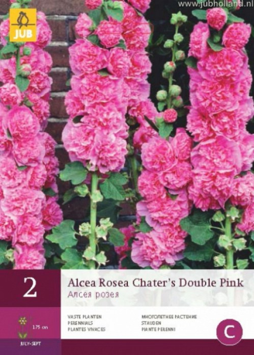 ALCEA-ROSEA-CHATERS-DOUBLE-PINK7