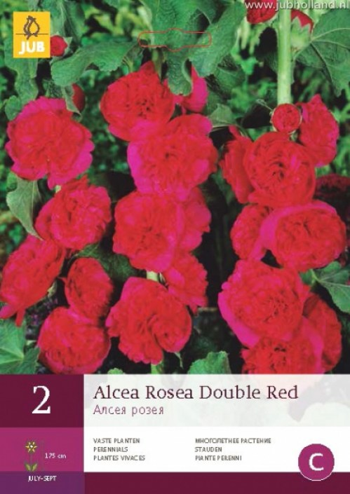 ALCEA-ROSEA-DOUBLE-RED