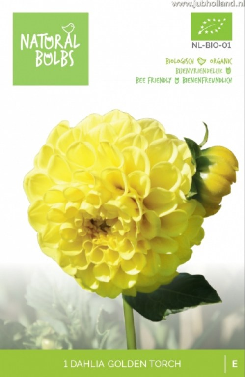 BIO-DAHLIA-GOLDEN-TORCH