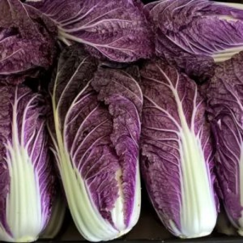 Chinese-cabbage-Scarrossa-F1-3-300x300