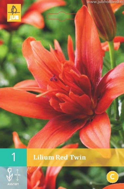 LILIUM-RED-TWIN